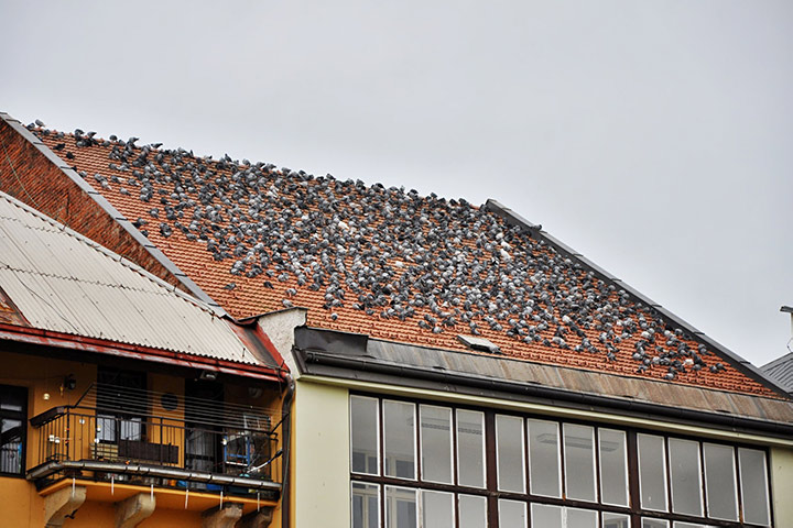 A2B Pest Control are able to install spikes to deter birds from roofs in Lewisham.