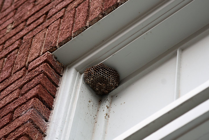 We provide a wasp nest removal service for domestic and commercial properties in Lewisham.
